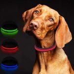 Los collares LED para perros más vendidos en 2020