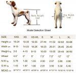 Las 10 Sillas de ruedas para perros más vendidas